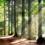 Der Kraftort Wald